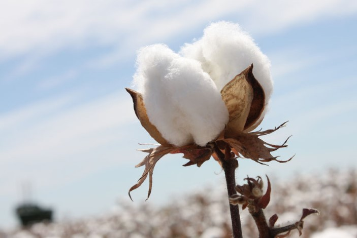 Vietnam cotton production