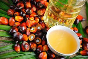 Palm oil suppliers in Indonesia